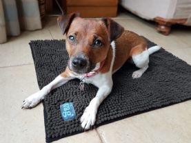 Henry Wag Microfibre Noodle Dog Mat